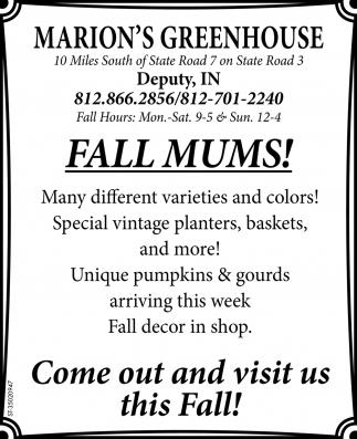 Fall Mums!